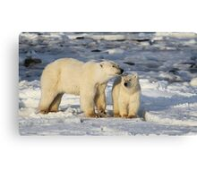Polar Bear, Mother & Cub, Churchill, Canada  Canvas Print