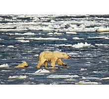 Polar Bears: Mother & Cub Struggling in Hudson Bay, Canada  Photographic Print
