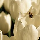 beetulip by kirky101