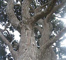 Pohutukawa tree by mistresskelly
