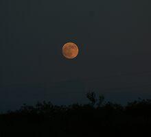 Darken Thy Moon by Cheyenne