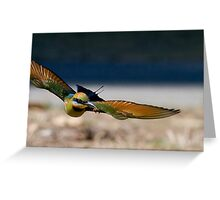 Rainbow Bee Eater with Bee Greeting Card