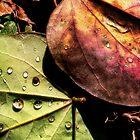 MultiColor by Nadya Johnson