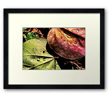 MultiColor Framed Print