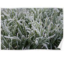 Frozen Blades of Grass Poster