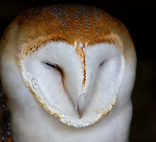 Barn Owl Portrait by jdmphotography