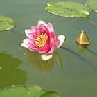 Water Lily by Ashley W