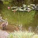 Baby Geese at Water Lily Pond by Karol Franks