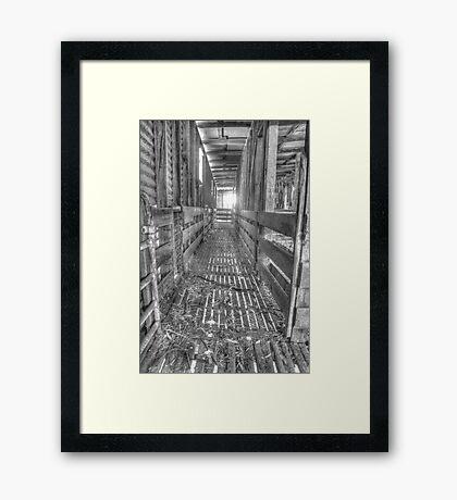 Sheep yards Framed Print