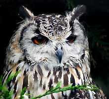 Eagle owl... by amzb87