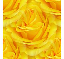 Modern Abstract Seamless Yellow Rose Petals Photographic Print