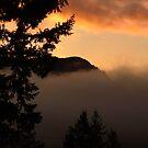 Vancouver Island BC ..  by AnnDixon