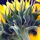 Sunflower1 by Nala