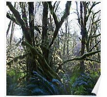 wet forests Poster