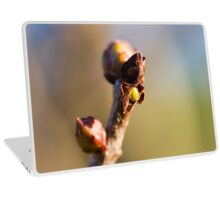 buds on the branches in spring Laptop Skin