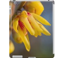 buds on the branches in spring iPad Case/Skin