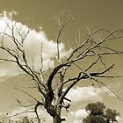 The Old Tree- Sepia tones by Diane  Kramer
