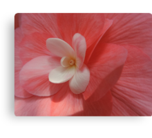 Begonia in Soft Shades of Red Canvas Print