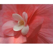 Begonia in Soft Shades of Red Photographic Print