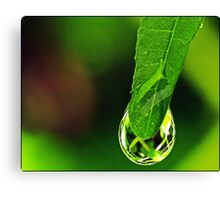 Nature's Crystal Canvas Print