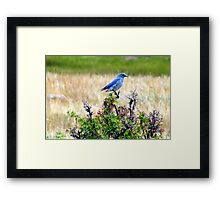 Born to Be Happy Framed Print