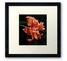 Brilliant Peach Framed Print