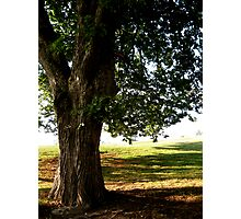Strong Tree Photographic Print