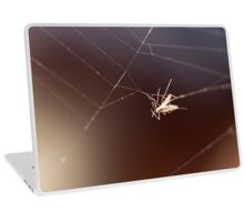 fly caught in the web Laptop Skin