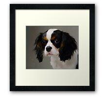Sweet Little Puppy  Framed Print