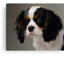 Sweet Little Puppy  Canvas Print