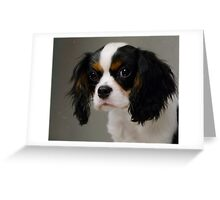Sweet Little Puppy  Greeting Card