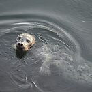 Harbour Seal by Jeff Ashworth & Pat DeLeenheer