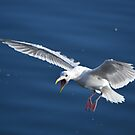 Seagull by Jeff Ashworth & Pat DeLeenheer