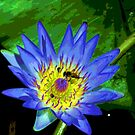 Water Lily by Alison Howson