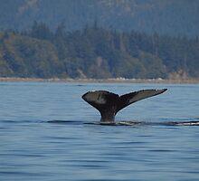 Humpback Whale by Jeff Ashworth & Pat DeLeenheer