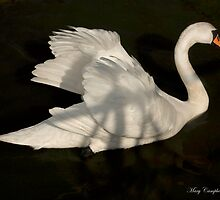 Feathers to Glide by Mary Campbell