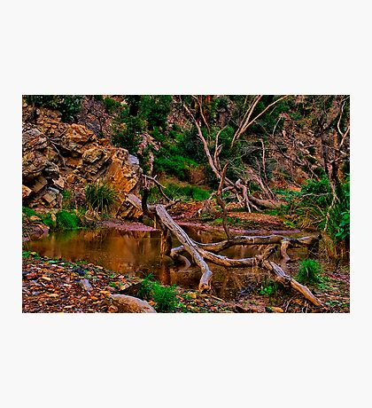 """The Billabong"" Photographic Print"