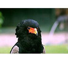 Bateleur Eagle #2 Photographic Print