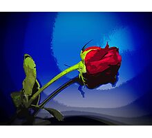 Dynamic Red Rose with Blue Background Photographic Print
