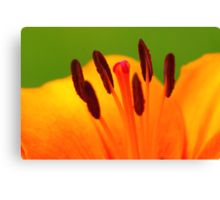 Stamen of the Lily Canvas Print