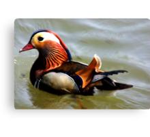 Mandrin Duck Canvas Print