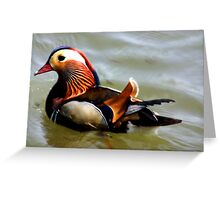 Mandrin Duck Greeting Card