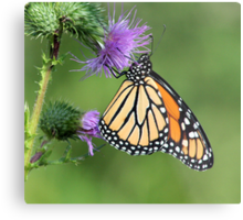 Monarch on a Thistle Metal Print
