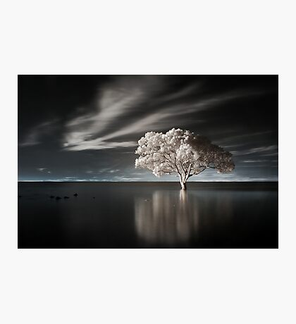 Tree in Water Photographic Print