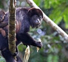 Howler monkey and baby Sticker