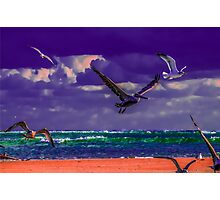 Perfect Flight in Color Photographic Print