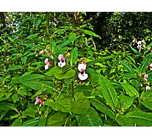 Forest Flower Photographic Print