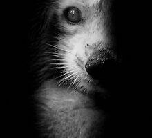 Koalaaaaaaahhh ! by Christophe Cotichelli