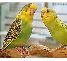 Pair Of Keets Photographic Print