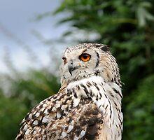 Owl by bubblebat